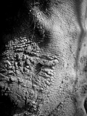 Photographie macro de pieds nus lors de barfooting en forêt humide