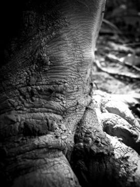 Photographie macro de pieds nus lors de barfooting dans la boue