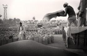 Récolte blé Punjab   Inde